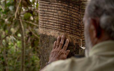 Uma aliança pela floresta – Episódio Chico Mendes